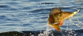 Обзор симуляторов рыбалки на РС